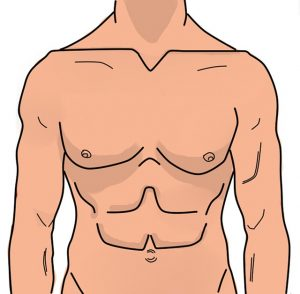 abdomen humain