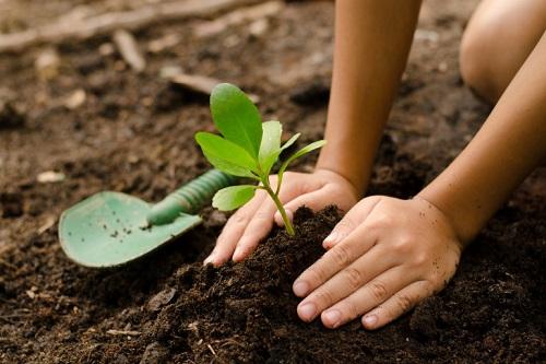 Service entretien jardin